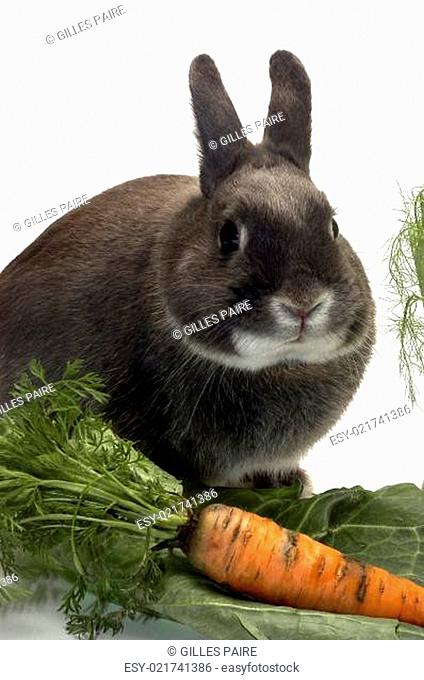 portrait of a rabbit and his favorite vegetables