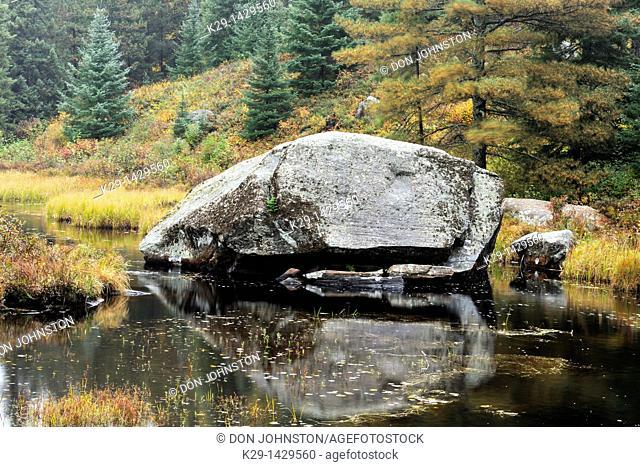 Erratic boulder in Opeongo Lake marshland Algonquin Provincial Park, Ontario