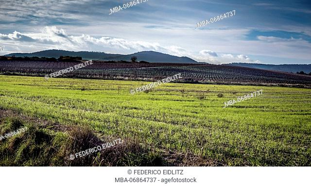 Vines in winter