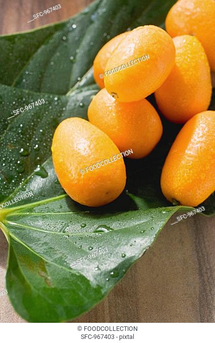 Kumquats with drops of water on leaves