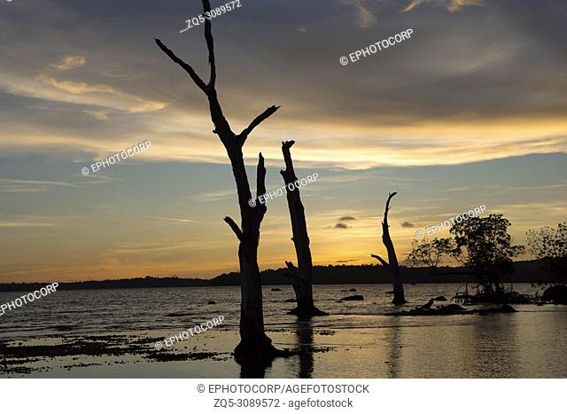 Silhouette of trees and woods against the setting sun on beach at Chidiya Tapu, Andaman