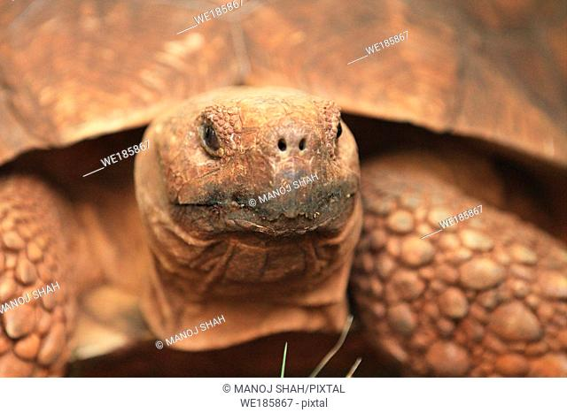 Waiting 45 minutes and lying flat on the stomach, the tortoise eventually came closer and popped its head out of the shell I then started clicking