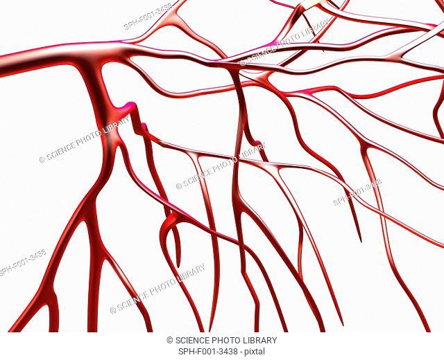 Arteries, computer artwork