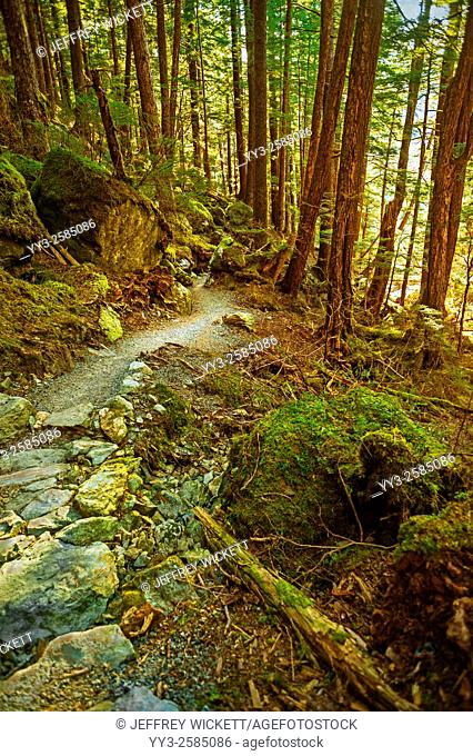 Beaver Lake Trail, Tongass National Forest near Sitka, Alaska
