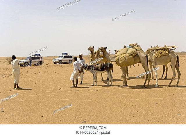 Sudan, Eastern Sahara, Bedouin caravan