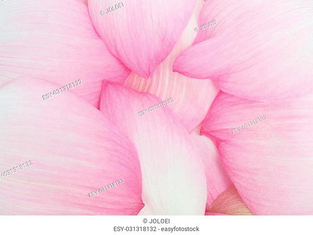 Petal lotus background