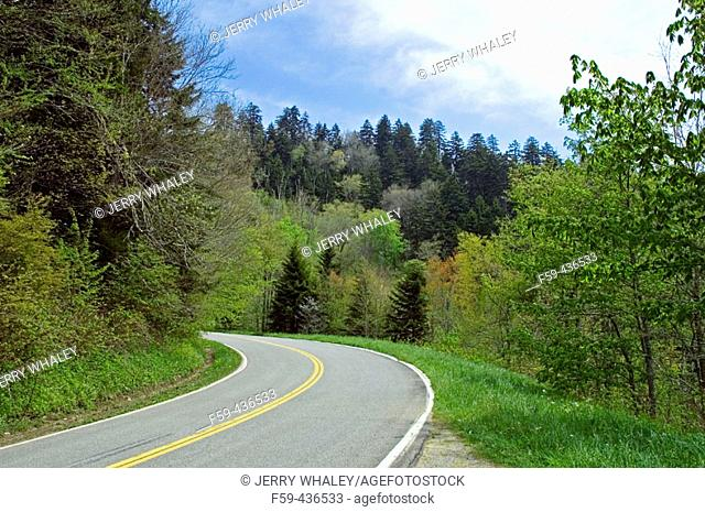 Springtime Scenics, Clingmans Dome Road, Great Smoky Mtns Nat. Park, NC