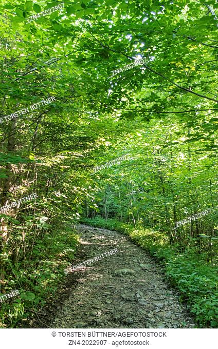 Leafy Hiking Trail to the Rinnerberger Waterfall in Kalkalpen National Park, Upper Austria, Austria