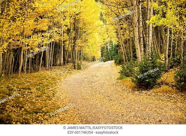 The pathway to autumn adventure in the Colorado mountains