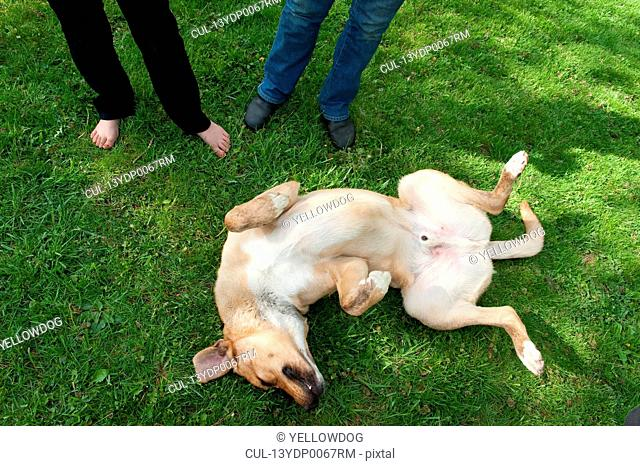 Dog rolling over on his back