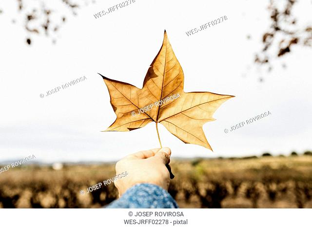 Hand with an brown autumn leaf