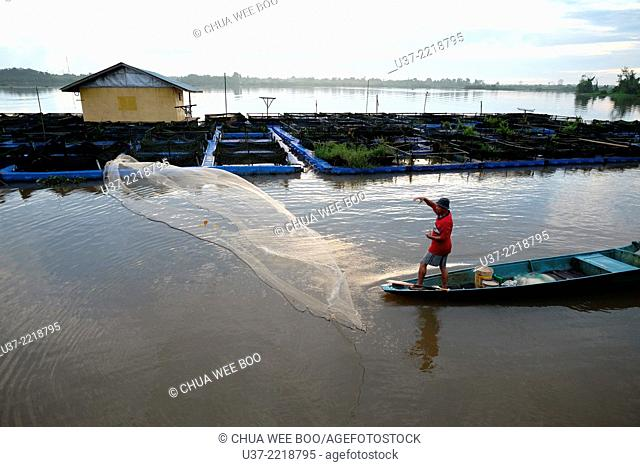 Fisherman throwing fishing net early in the morning at Kampung Sejijak, Matang, Sarawak, Malaysia
