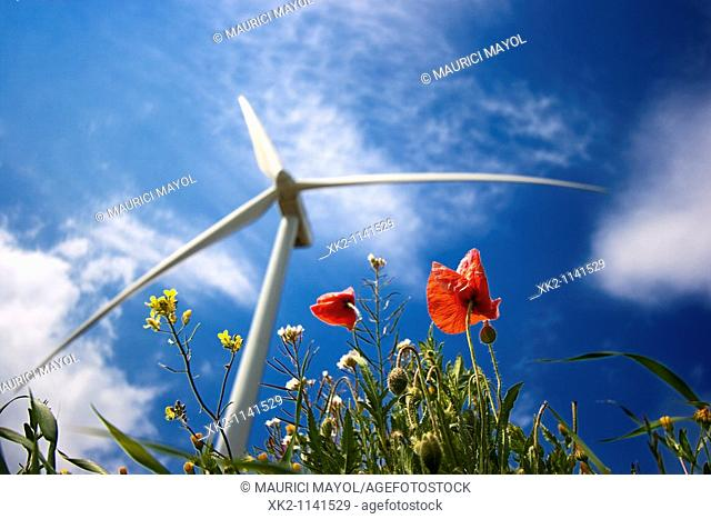 Wind turbine and poppies