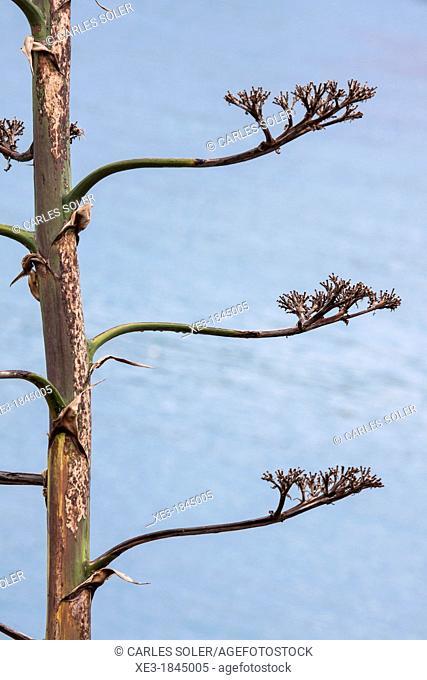 Tree, Majorca, Balearic Islands, Spain