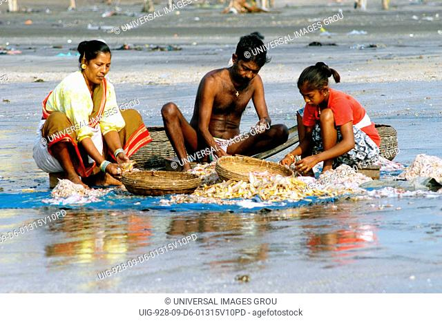 Family Sorting Different Varieties Of Fish For Sale In Local Market At Uttan Beach, Near Bombay Now Mumbai, Maharashtra, India