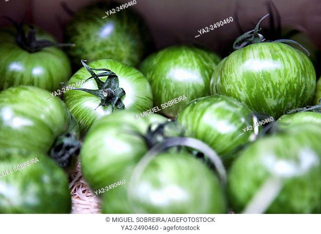 Green Tiger Tomatos at Borough Market in London UK