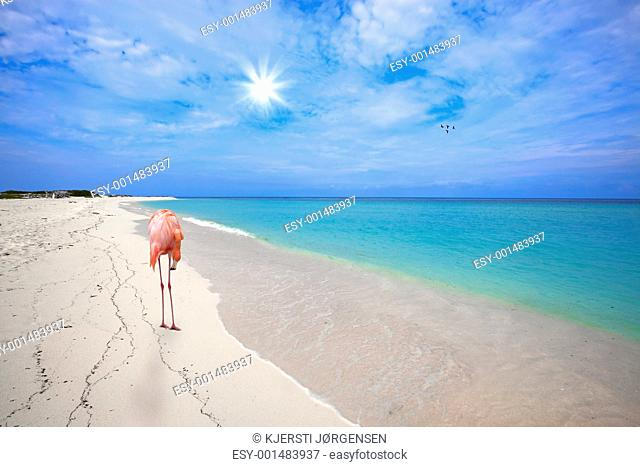 Flamingo at the beach