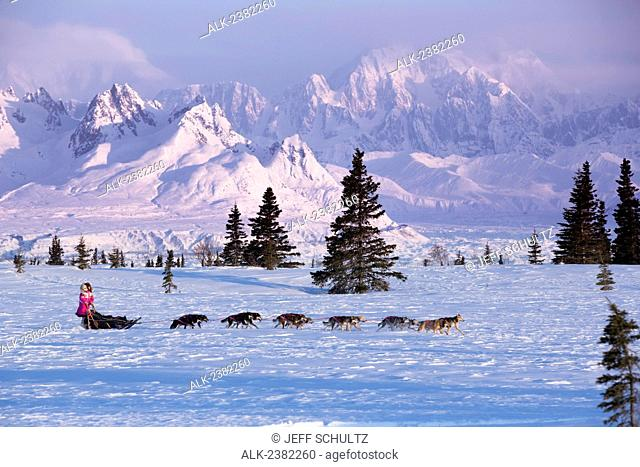 DeeDee Jonrowe mushes her dog team during a spring training run at dawn with Mt. Mckinley and the Alaska Range in the background. Denali State park