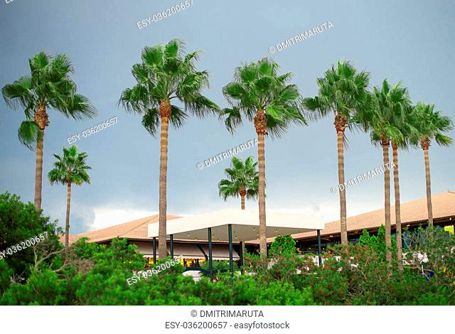 Palm trees and hotel in the park