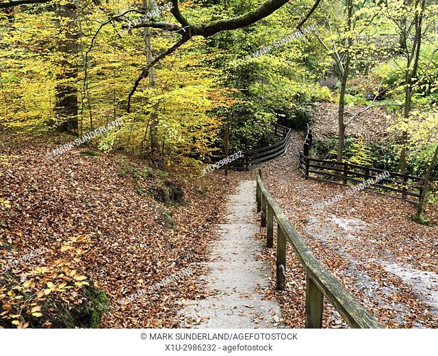 Autumn Colours in Goitsock Wood at Hallas Bridge near Cullingworth West Yorkshire England