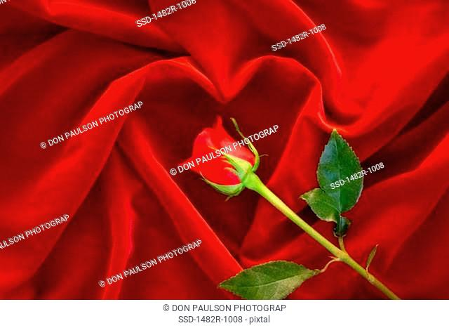 Close-up of a rose on a sheet