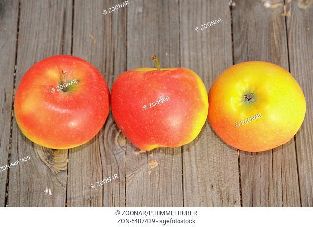 Früchte der Sorte 'Nicoter` bzw. 'Kranzi`