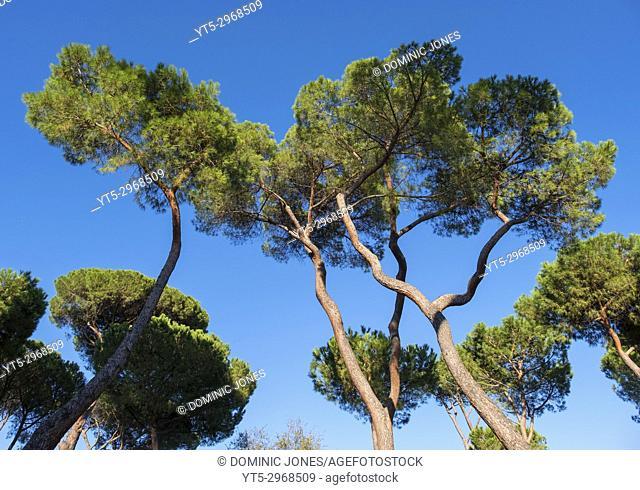 Trees in Villa Borghese gardens, Rome, Italy, Europe
