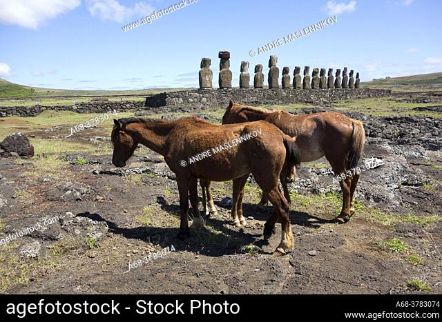 Horses at Ahu Tongariki. It is the largest ahu on Rapa Nui/Easter Island (a Chilean island in the Pacific). Its moai were toppled during the island's civil wars...