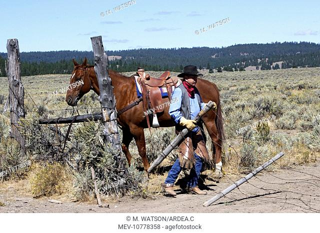 Cattleman with Quarter / Paint Horse - putting up fence