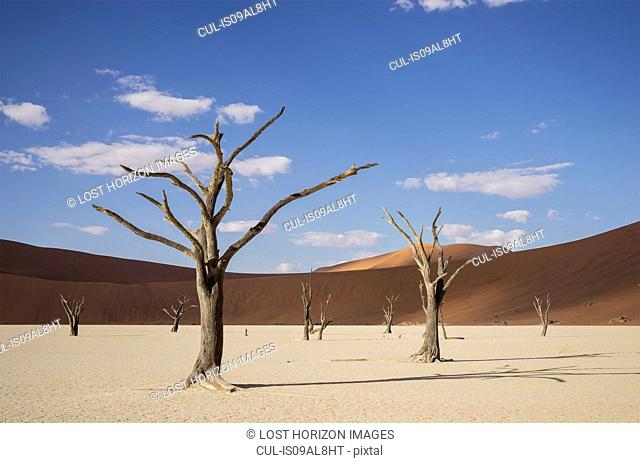 Clay pan with dead trees and sand dunes, Deaddvlei, Sossusvlei National Park, Namibia