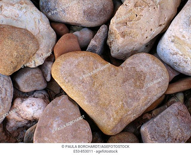 Heart-shaped rock, Grand Wash Trail, Capitol Reef National Park, Utah, United States © Paula Borchardt - All rights reserved