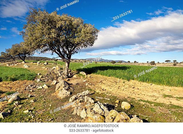 Country in Villapalos. San Pablo de los Montes. Toledo. Castilla la Mancha. Spain. Europe
