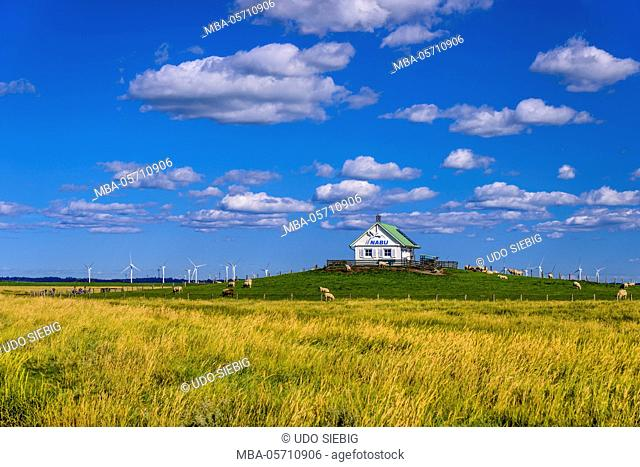 Germany, Schleswig-Holstein, North Frisia, Reußenköge, Hamburger Hallig, salt meadow, nature conservation The Bund house