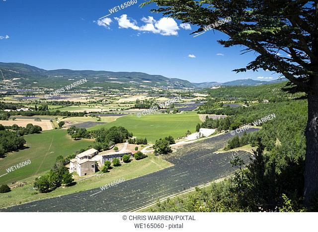 Foret de Javon Plateau Bois du defens Sault Vaucluse Provence-Alpes-Côte d'Azur France