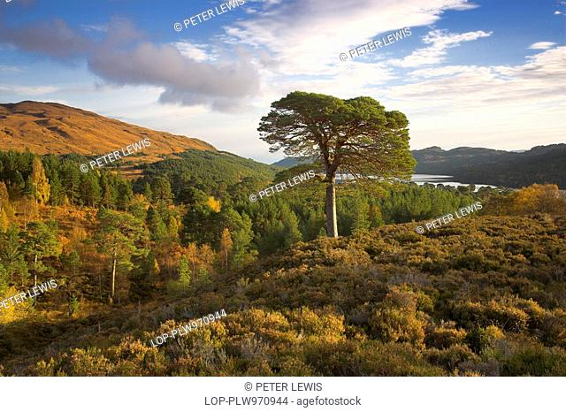 Scotland, Highland, Glen Affric, Autumn landscape of Glen Affric, described as 'the most beautiful glen in Scotland'