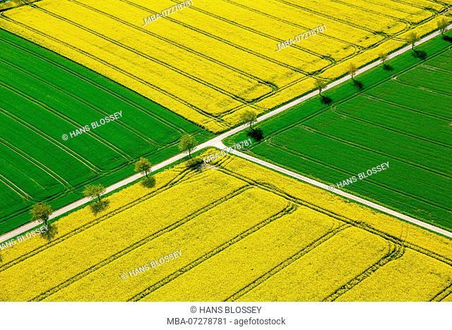 Rape fields on the city boundary between Warstein-Belecke and Anröchte-Erwitte, green cornfields, yellow rape fields, agriculture, Warstein, Sauerland