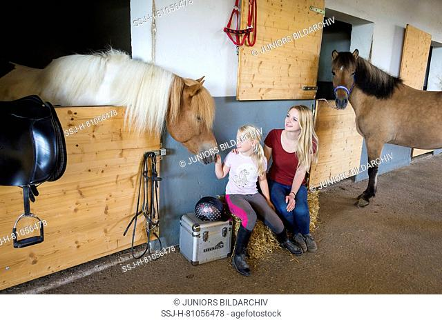 Tennagaer and girl sitting next to Icelandic Horses in a stable. Austria