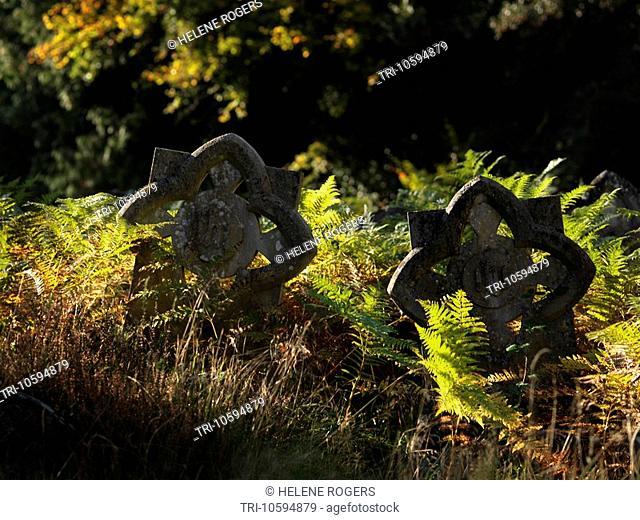 Unusual Gravestones amongst Autumn Bracken Holy Trinity Church Westcott Surrey