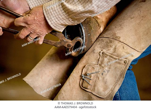 Putting new shoes on a Mule sometimes requires more than one try to get the nails in just right
