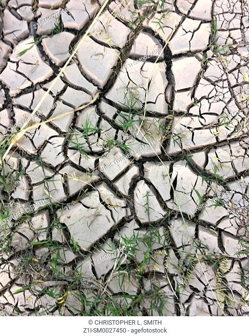 Dry cracked earth after a long hot summer with little rain