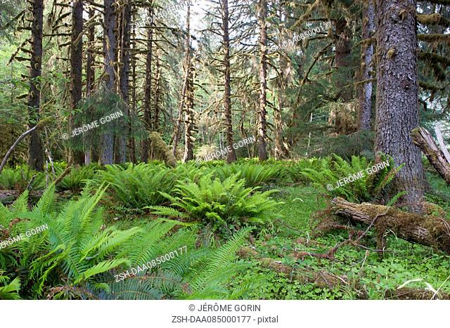 Forest, Olympic National Park, Washington, USA
