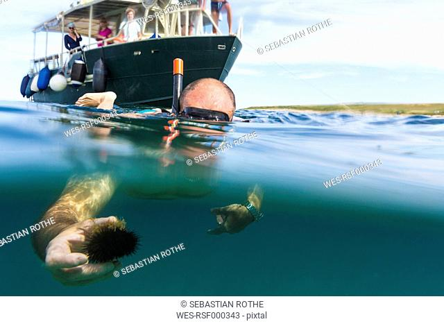 Croatioa, Istria, Pula, senior man snorkeling, holding sea urchin