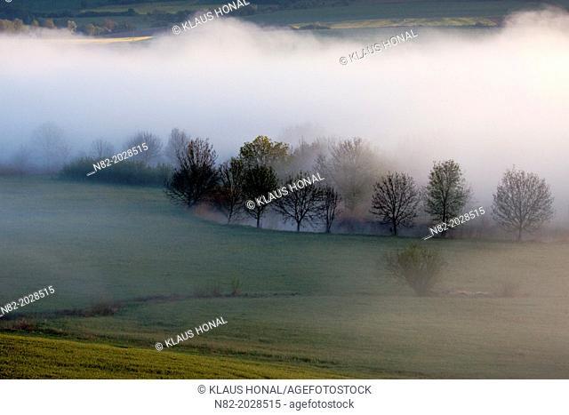 Trees line the bank of the Wörnitz river in morning fog - Region Hesselberg, Bavaria/Germany