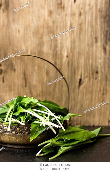 Fresh wild garlic leaves in a basket