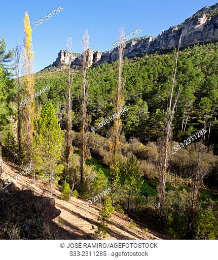 Tagus canyon in the Natural Park of High Tagus. Poveda de la Sierra. Guadalajara. Castilla la Mancha. Spain. Europe