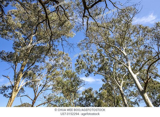 Currawong Bush Parks, Melbourne, Australia
