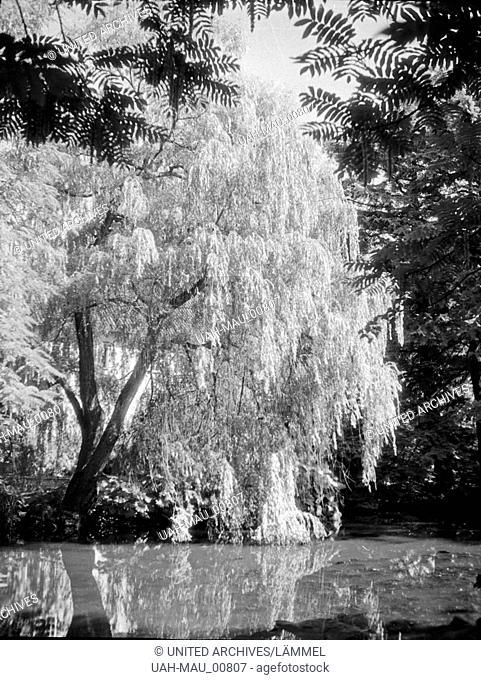 Anlagen im Kurpark von Danzig Glettkau, 1930er Jahre. The health resort parks and gardens of Gdansk Glettkau, 1930s