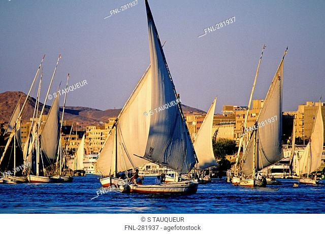Sailboats in river, Nile River, Aswan, Egypt