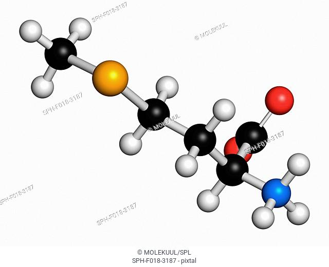 Selenomethionine amino acid molecule. Selenium containing natural analogue of methionine. Atoms are represented as spheres with conventional colour coding:...