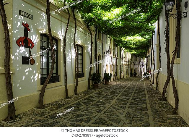 The typical Andalusian style Calle Ciegos with trained vine and the Tio Pepe plaque at the Bodega Gonzalez Byass in Jerez de la Frontera